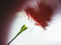 Apenas flor de papel Fotografia de Stock Royalty Free