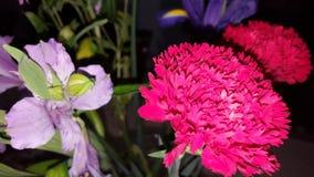 Apenas flores Imágenes de archivo libres de regalías