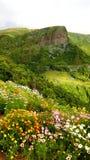 Apenas flores en la isla de Flores fotografía de archivo libre de regalías