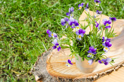 Apenas llovido encendido El ramo de primavera florece en un florero en un árbol del corte Tarjeta con las flores del resorte foto de archivo libre de regalías