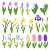 Apenas llovido encendido Iris, lirios del valle, tulipanes, narcissuses, azafranes y otras primaveras Iconos del diseño del jardí Fotos de archivo