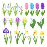 Apenas llovido encendido Iris, lirios del valle, tulipanes, narcissuses, azafranes y otras primaveras Iconos del diseño del jardí Fotos de archivo libres de regalías