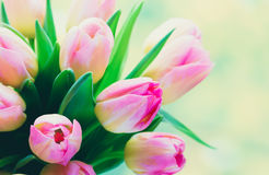 Apenas llovido encendido Ramo del tulipán en el fondo del bokeh Fotos de archivo libres de regalías
