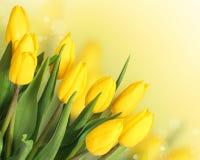 Apenas llovido encendido Tulipanes amarillos hermosos Imagenes de archivo