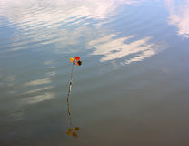 Apenas na água Fotos de Stock