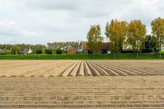 Apenas patatas sembradas en un campo al lado de un terraplén en un holandés Imagenes de archivo