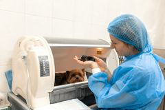 Apenas perrito nacido en hospital del animal doméstico Concepto de la atenci?n sanitaria del animal dom?stico foto de archivo libre de regalías