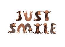 Apenas sonrisa Letras de los perros basset Foto de archivo libre de regalías