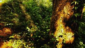 Apenas um log e uma árvore Foto de Stock Royalty Free