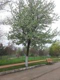 Apenas uma caminhada no parque Fotos de Stock Royalty Free