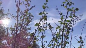 Apenas un arbusto agradable Fotografía de archivo libre de regalías
