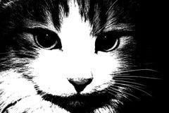 Apenas, un gato, un negro, y un blanco, un animal doméstico Imagen de archivo