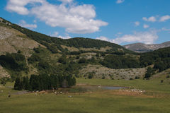 Apennines lake with wild livestock in Lazio Royalty Free Stock Image