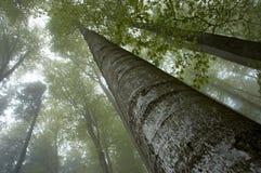 Aperçu des cimes d'arbre Images stock