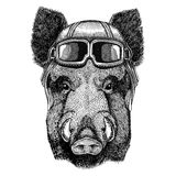 Aper, boar, hog, hog, wild boar wearing leather helmet Aviator, biker, motorcycle Hand drawn illustration for tattoo Royalty Free Stock Photography