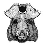 Aper, boar, hog, hog, wild boar wearing pirate hat Cocked hat, tricorn Sailor, seaman, mariner, or seafarer. Wild animal wearing pirate cocket hat Stock Images