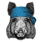 Aper, boar, hog, hog, wild boar Wild animal wearing bandana or kerchief or bandanna Image for Pirate Seaman Sailor Biker Royalty Free Stock Photo