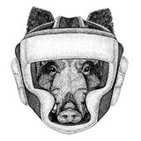 Aper, boar, hog, hog, wild boar Wild boxer Boxing animal Sport fitness illutration Wild animal wearing boxer helmet. Wild boxer Boxing animal Sport fitness Royalty Free Stock Photography