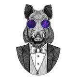 Aper, boar, hog, wild boar, hog, Hipster animal Hand drawn image for tattoo, emblem, badge, logo, patch, t-shirt Stock Image