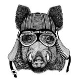 Aper, boar, hog, wild boaraper, boar, hog, wild boar Hand drawn image of animal wearing motorcycle helmet for t-shirt Stock Photography
