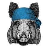 Aper, verro, maiale, maiale, bandana dell'animale selvatico del cinghiale o bandana o immagine d'uso del bandanna per il pirata S Fotografia Stock Libera da Diritti
