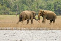 Aperto de mão dos elefantes imagem de stock