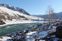 Apertura del ghiaccio sul fiume di Katun del turchese in primavera Fotografia Stock Libera da Diritti