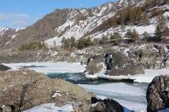 Apertura del ghiaccio sul fiume di Katun del turchese in primavera Immagini Stock Libere da Diritti