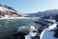 Apertura del ghiaccio sul fiume di Katun del turchese in primavera Immagini Stock
