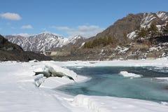 Apertura del ghiaccio sul fiume di Katun in primavera, Altai, Russia Immagine Stock