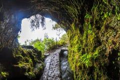 Apertura en un túnel a lo largo de un rastro que camina de un levada en Madeira Fotos de archivo libres de regalías