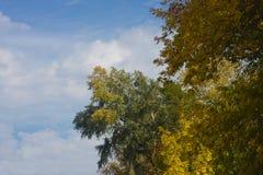 Apexes των δέντρων μέχρι μια ημέρα φθινοπώρου Στοκ Φωτογραφίες