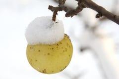 Apfel Stockfotos