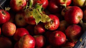 Apfel hunza Stockbilder