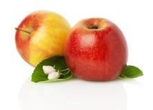 Apfel mit zwei Rottönen mit Blüte auf weißem Hintergrund Lizenzfreies Stockbild