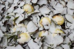 Apfel- und weißerschnee Lizenzfreies Stockfoto