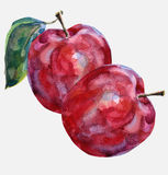 Apfel zwei Lizenzfreies Stockbild