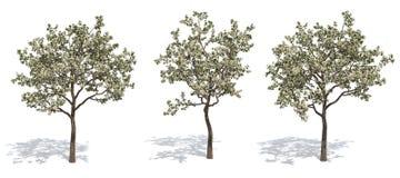 Apfelbäume Lizenzfreies Stockbild