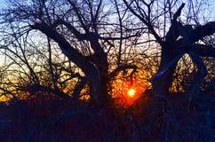 Apfelbäume im Winter Lizenzfreie Stockfotografie