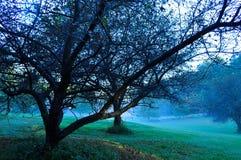 Apfelbäume nach der Ernte mit weißem Zaun auf einer schrägen Landschaft Lizenzfreie Stockfotos