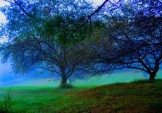 Apfelbäume nach der Ernte mit weißem Zaun auf einer schrägen Landschaft Stockfotografie