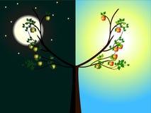 Apfelbäume Tag und Nacht Stockfotos