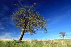 Apfelbaum Stockfotografie