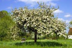 Apfelbaum Lizenzfreies Stockbild