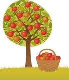 Apfelbaum Stockbilder