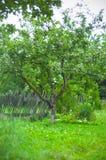 Apfelbaum Stockfoto
