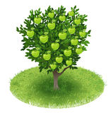 Apfelbaum auf dem grünen Gebiet Lizenzfreies Stockfoto