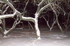 Apfelbaum in der Winternacht unter dem Schnee Stockfoto