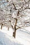 Apfelbaum in der Wintersaison Lizenzfreies Stockbild