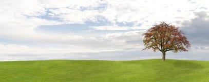 Apfelbaum-Hintergrund Stockfotografie